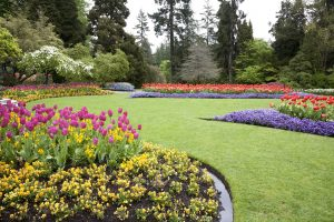 A beautiful landscaped garden of flowers